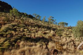 Spinifex #4